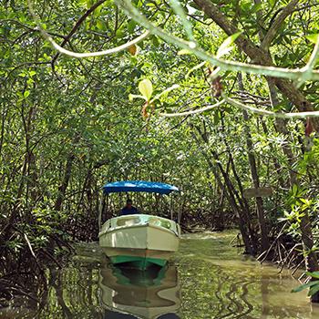 Mangrove Tours Costa Rica