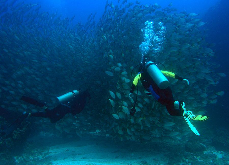 Scuba Dive Cano Island Costa Rica