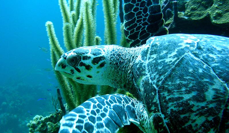 Sea turtle Cano island