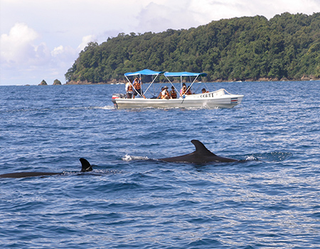 Whales Osa Peninsula