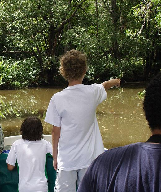 Mangrove boat tours