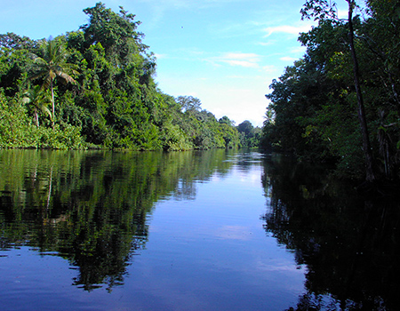 Rivers and mangroves
