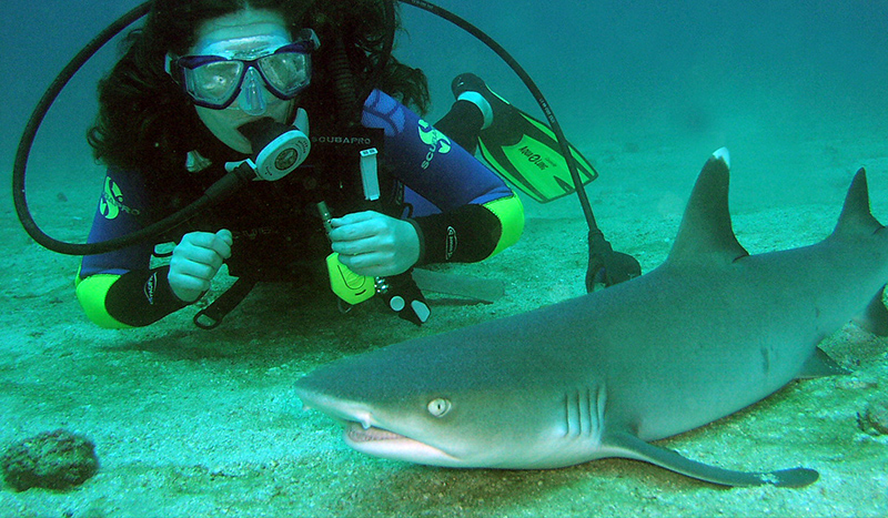 Cano island shark Costa Rica