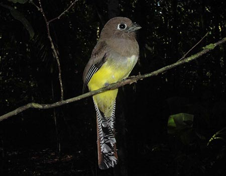 Night tour birds