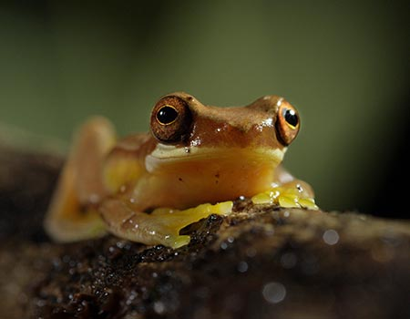 Night tour frogs