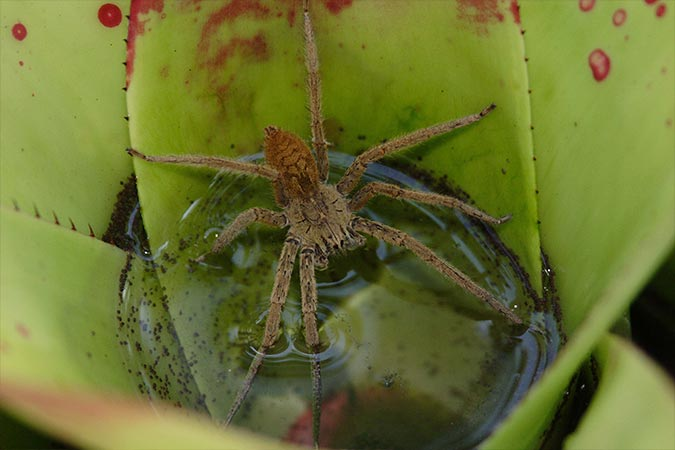 Spider night walking jungle tour