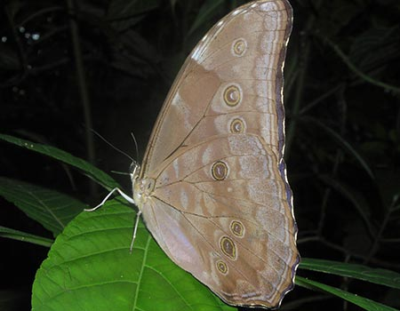 Moth night tour adventure