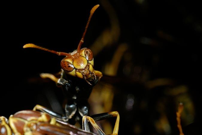 Night bugs Costa Rica tours