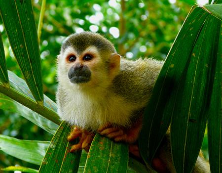 Monkey jungle tours